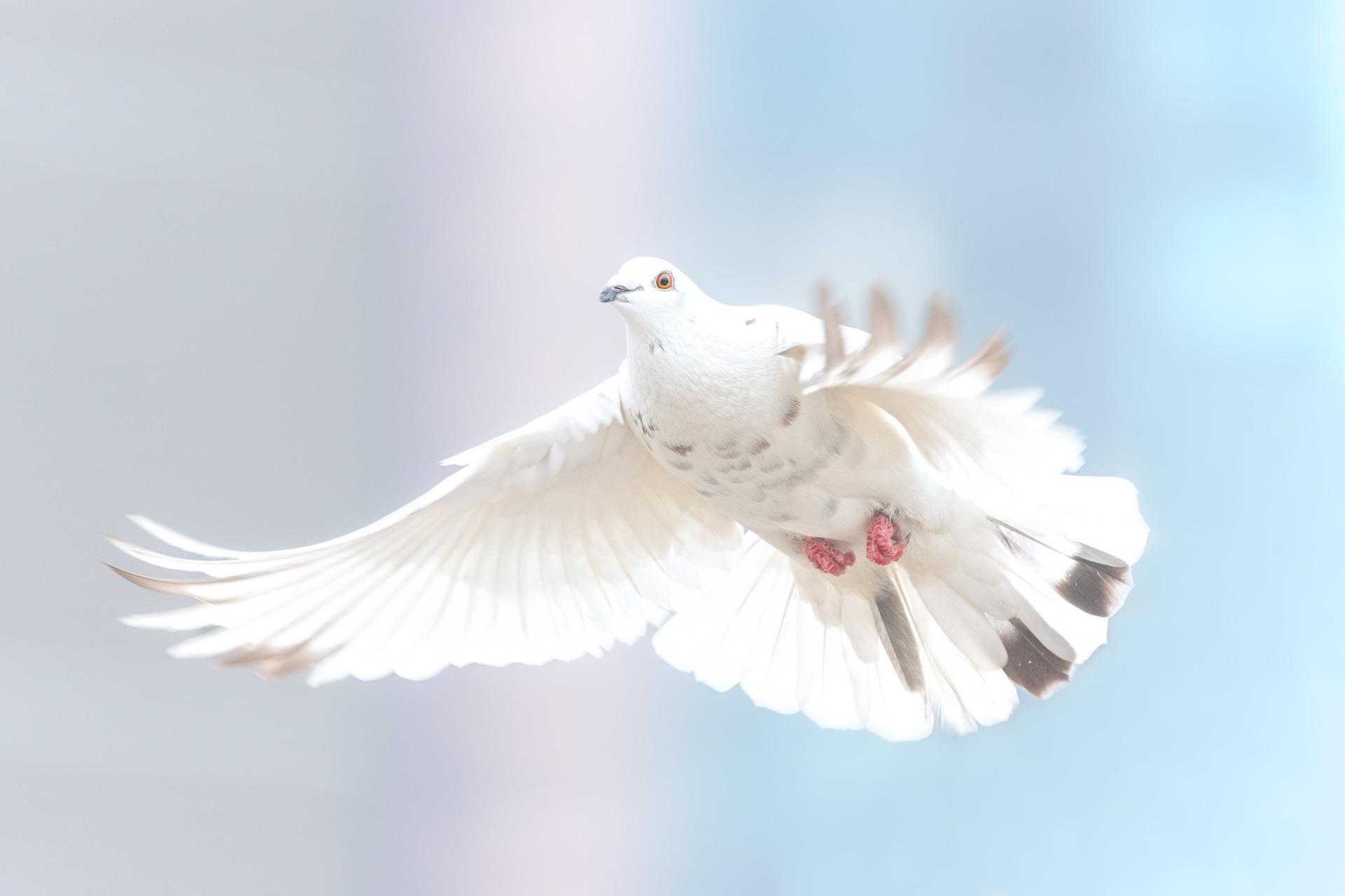 Pace e relizione